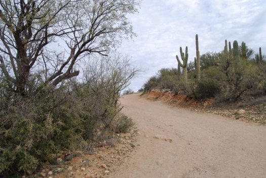 arizona path