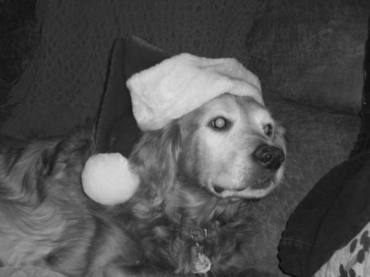Tucker santa b&w
